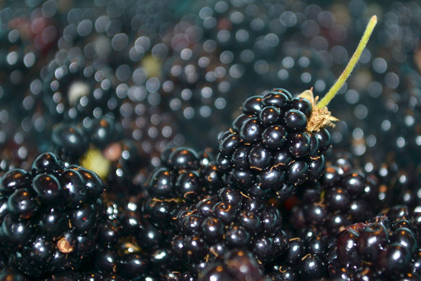 freshblackberries